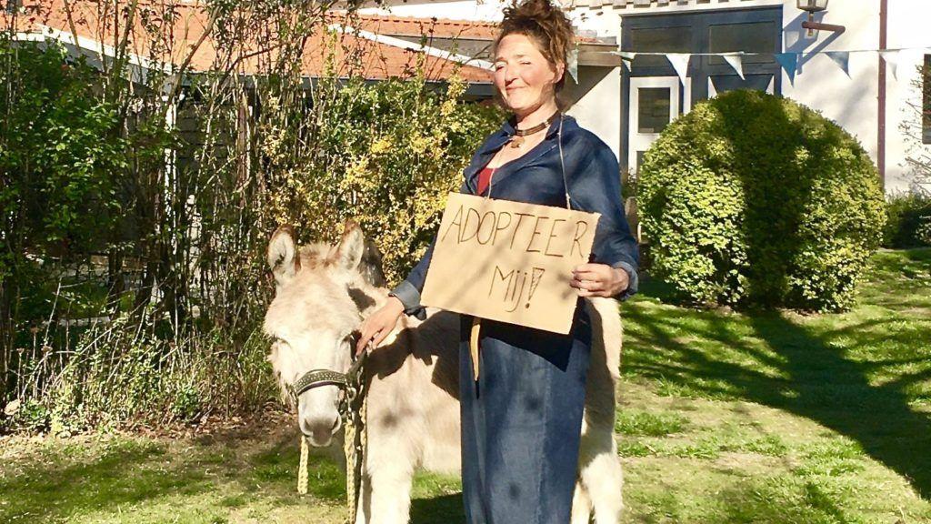 adopteer een ezel